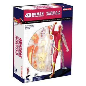 HUMAN-MUSCLE-amp-SKELETON-ANATOMY-MODEL-PUZZLE-4D-Kit-26058-TEDCO-SCIENCE-TOYS