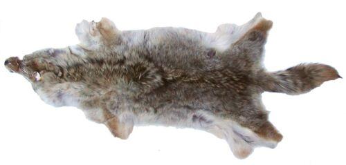 attraktives Dekofell 95-125 cm Coyotenfell Fell vom Coyoten Kojotenfell