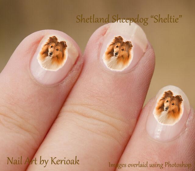 Shetland Sheepdog, Sheltie, Set of 24 Dog Nail Art Stickers Decals by  Kerioak - Shetland Sheepdog Sheltie Set Of 24 Dog Nail Art Stickers Decals By