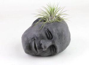 Concrete-Head-6-034-Air-Plant-Holder-Succulent-Planter-Handmade-Home-Garden-Decor