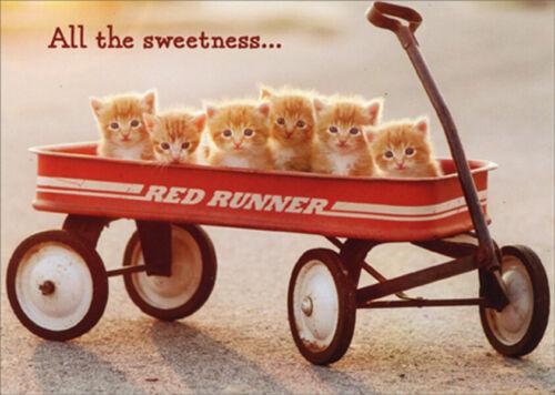 Avanti Press Kittens In Wagon Funny  Humorous New Pet Congratulations Card