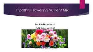 Tripathi-039-s-Hydroponics-Nutrient-for-Flowering-stage-Makes-100-Lit