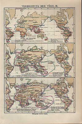 KöStlich Landkarte Map 1913: Verbreitung Der VÖgel. I-iii. Vogel 100% Original