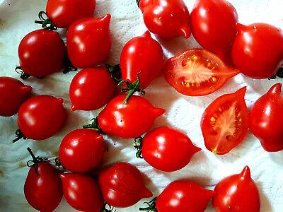 """/""""Winterkeeper/""""  klein lange lagerfähig,auch für Topf rot Tomate Kübel"""