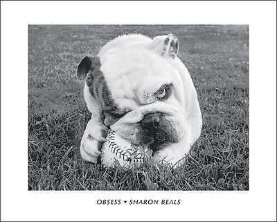 BULLDOG ENGLISH BRITISH DOG Black /& White PHOTO ART PRINT Chewing a Baseball