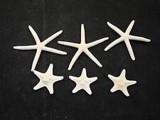 3 White Pencil Starfish & 3 White Knobby Starfish Beach Wedding Nautical Decor