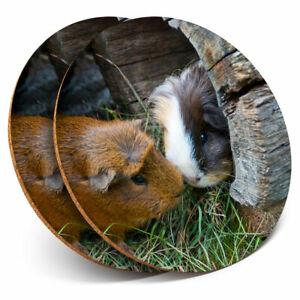2 X Coasters Cute Guinea Pig Couple Pet Animal Home Gift 8247 Ebay