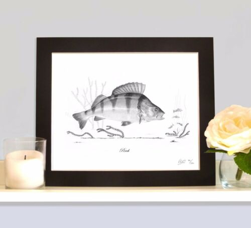 PERCH Fishing Fish Art Print MOUNTED Picture Present For Lure Predator Angler