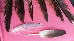VENTE-Naturel-Plumes-x8-Seagull-grand-petit-Free-Fallen-plumes-UK