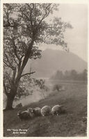 Early Morning & Sheep, RYDAL WATER, Westmorland RP