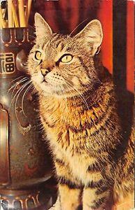 Br43966-cat-chat-animal