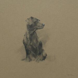 Labrador Study / Dog Sketch / Original Art