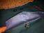 Pantaloni-cerimoniali-ufficiale-sovietico-dell-039-URSS miniatura 5