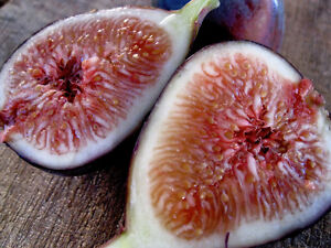 UNKNOWN VARIETIES FROM ISRAEL ISRAEL Fig Cutting 2 pcs