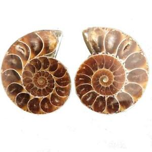 A-Pair-of-Real-Ammonite-Fossil-Specimens-from-Madagascar-L-45-mm-1-78-034