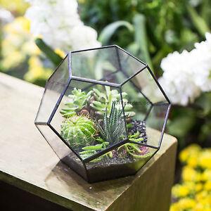 Bon Image Is Loading Pentagon Ball Glass Geometric Terrarium Box Tabletop  Succulent