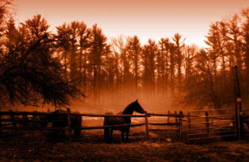 photo poster art Encadrée imprimer-marron effet sunset de chevaux dans le paddock