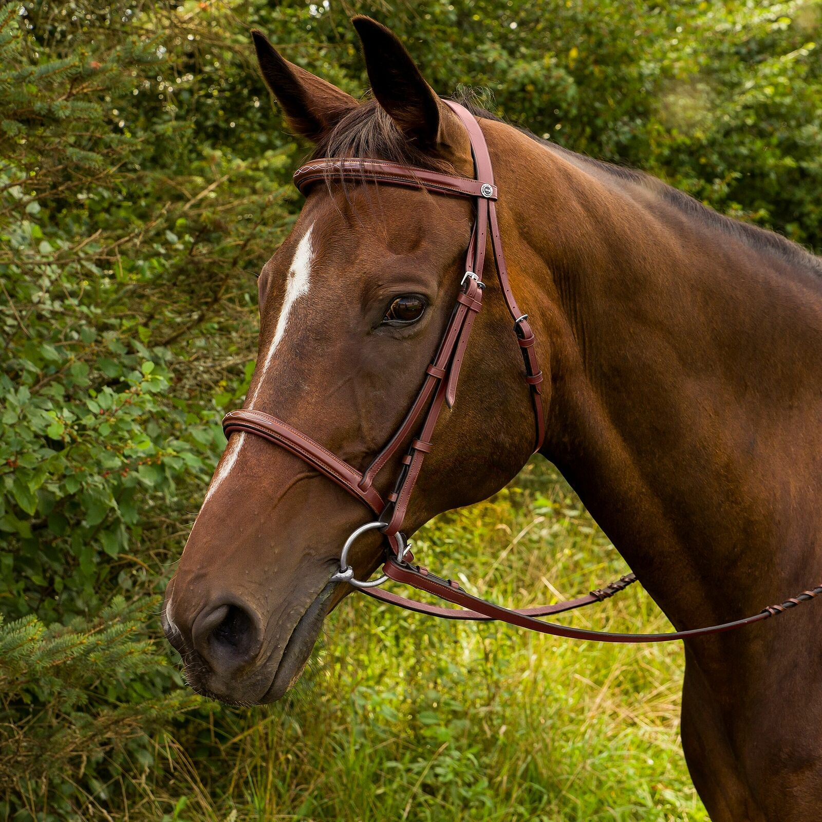 Henri de Rivel cavallo Fancy Raised Padded Bridle with Laced Reins