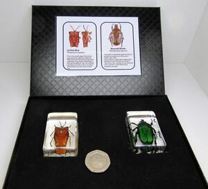 Real insects nature beetles in crystal clear resin & information card & gift box