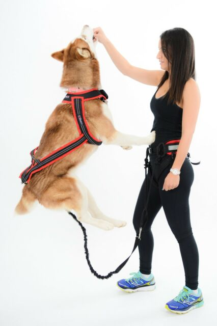 brand new dog harness for walking/ running /canicross hands free leash