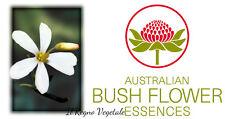 FIORI AUSTRALIANI Wedding Bush RELAZIONI STATICHE/Impegno in Relazioni-Obiettivi