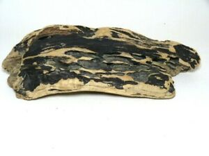 """Beautiful  naturally  """"altered/formed"""" beach wood piece with holes and creases"""