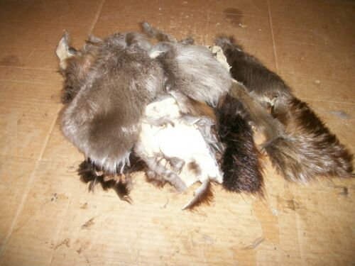 LOT of tanned BADGER scrap pieces fur pelt skin FLY TYING smaller native craft
