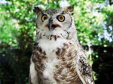 NATURE BIRD OWL CLOSE UP EYE BEAK PREY EAGLE POSTER ART PRINT PICTURE BB1309A