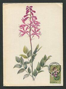 GéNéReuse La Pologne Mk 1963 Flore Fleurs Flowers Maximum Carte Carte Maximum Card Mc Cm C9334-afficher Le Titre D'origine Belle Qualité