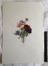 "P.J. Redoute-Langlois Hand-Colored Etching Anemone Simplex Oval Inset 16"" X 23"""