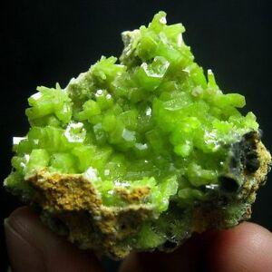 Green-Pyromorphite-Crystal-Specimen-pygx2ie0327