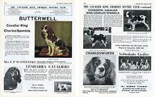 1969 DOG WORLD BREED KENNEL ADVERT PRINT PAGE CAVALIER KING CHARLES SPANIEL CLUB