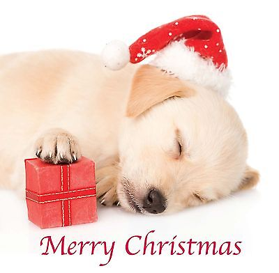 8 x Christmas Cards Pack Yellow Santa Labrador Sleeping Dog Puppy & FREE Post!