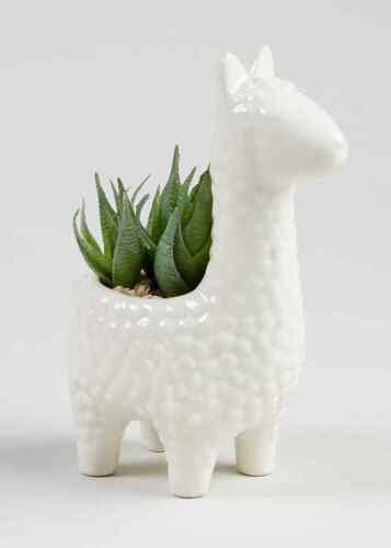 Nouveau artiicial succulent en lama planteur en Crème-Parfait pour Appuis de Fenêtre