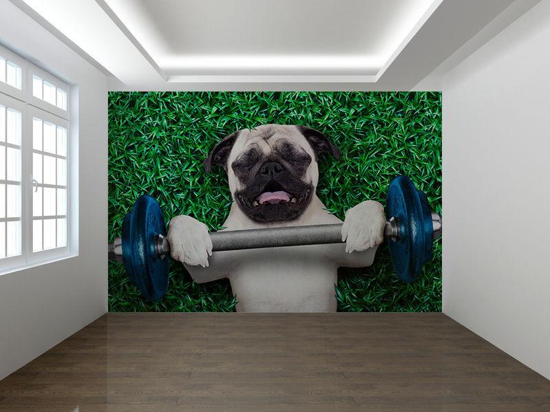 Mops Hund als Personal Trainer Foto Wandtapete Wandgemälde (31536726)
