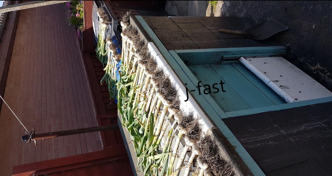 20 Fresh Organic Garlic cloves,Wight/seeds From 2 bulbs(Hardy Bulb/Planting Now)