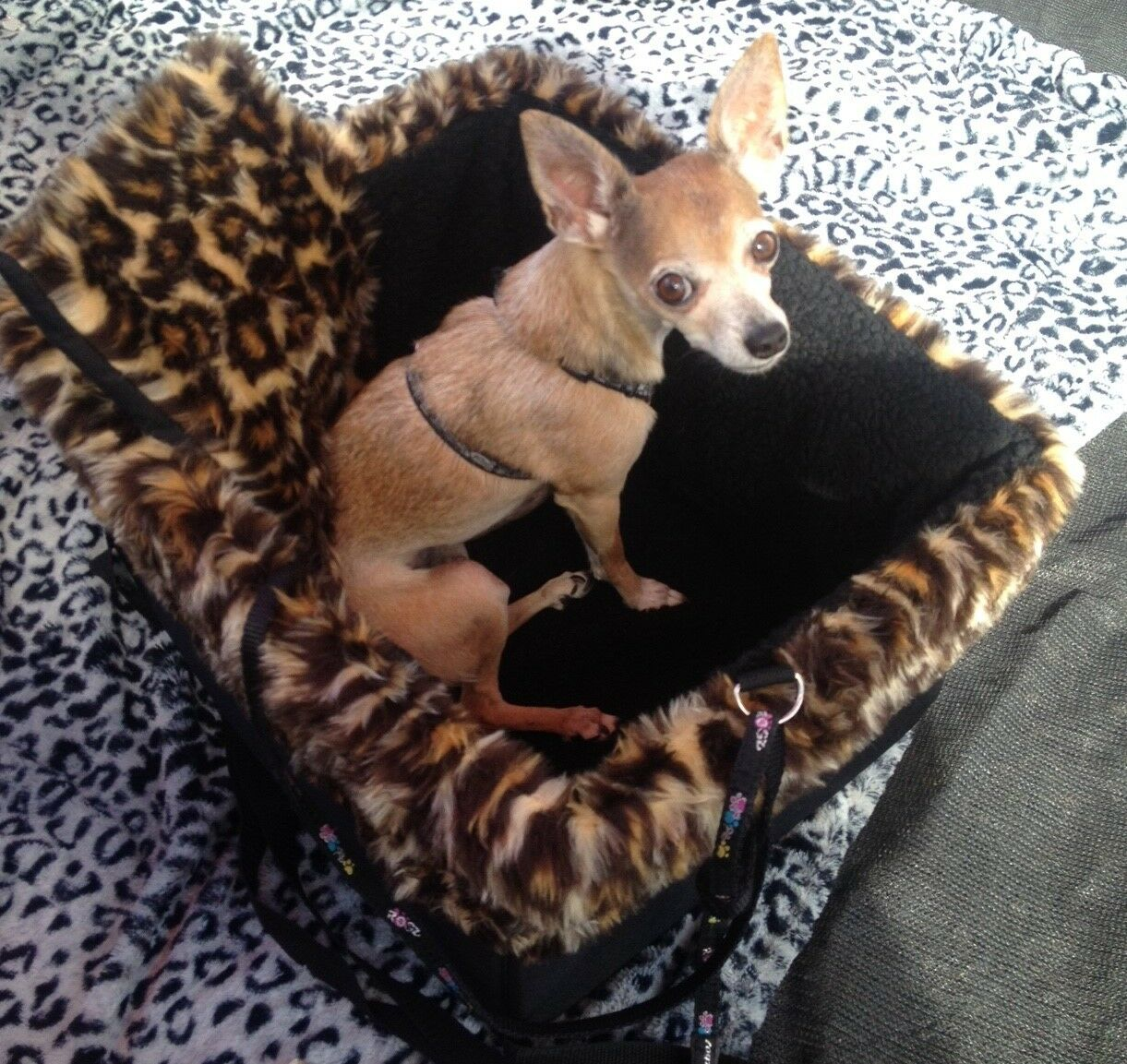 Small nero Dog Car Booster Seat ( Leopard  nero lining) - Dogs Out Doing