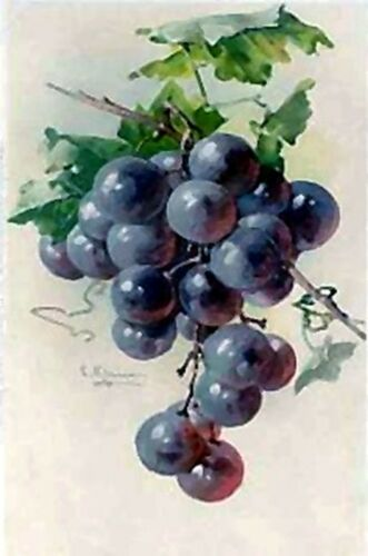 Purple Grapes~counted cross stitch pattern #1860~Flower Fruit Nature Graph Chart
