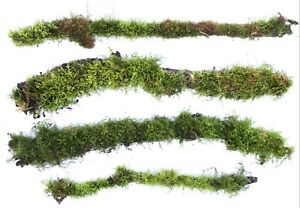 Live Moss Mossy Branches Sticks Terrarium Plant Snakes Reptile
