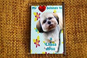 Lhasa-Apso-Gift-Dog-Fridge-Magnet-77-x-51-mm-Free-UK-Post-Xmas-stocking-filler
