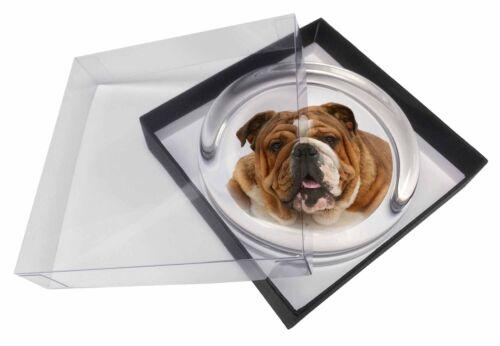 AD-BU7PW Beautiful Tan Bulldog Glass Paperweight in Gift Box Christmas Present