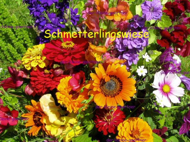 SOMMER-BLUMEN-WIESE BLÜTENTEPPICH BLUMEN-MISCHUNG BLUMENMEER SAAT SAMEN AUSWAHL
