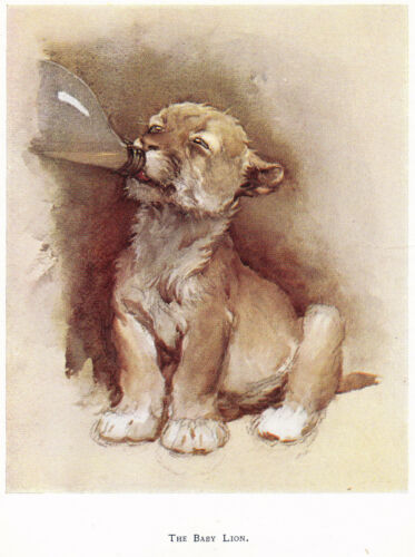 CECIL ALDIN Baby LION Zoo Animal Bottle Feed VINTAGE  Print 1933  MATTED Picture