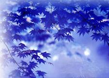 20Pcs Rare Blue Maple Seeds Maple Bonsai Tree Plants Garden Home Decoration HK74