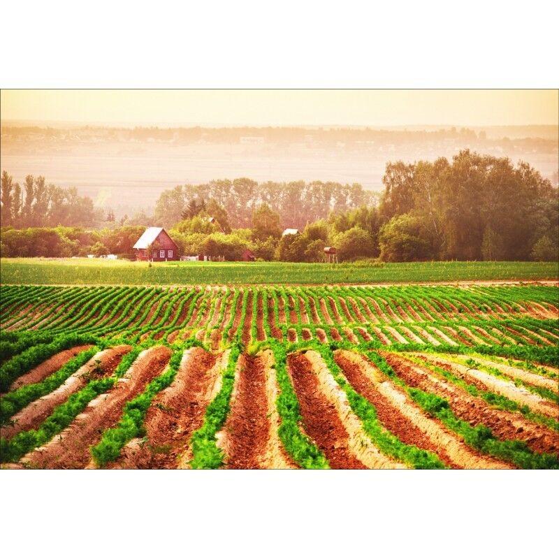 Stickers muraux paysage déco : paysage muraux champs 1430 4c6d42