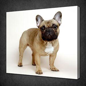 Bulldog Francese Cucciolo Immagine Su Tela Stampa Decorazione Da