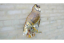 Metal-Garden-Owl-Wall-Decoration-Outdoor-Ornament-Bird-Sculpture-Mounted-Decor thumbnail 2