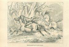 The Legend of Sleepy Hollow Ichabod Crane Headless Horseman GRAVURE PRINT 1856