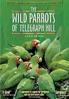 Wild Parrots of Telegraph Hill Collec 0767685139820 With Ivan Stormgart DVD