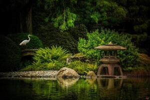 Egrets-Garden-by-Chris-Lord-Photo-Art-Print-Poster-24x36-inch